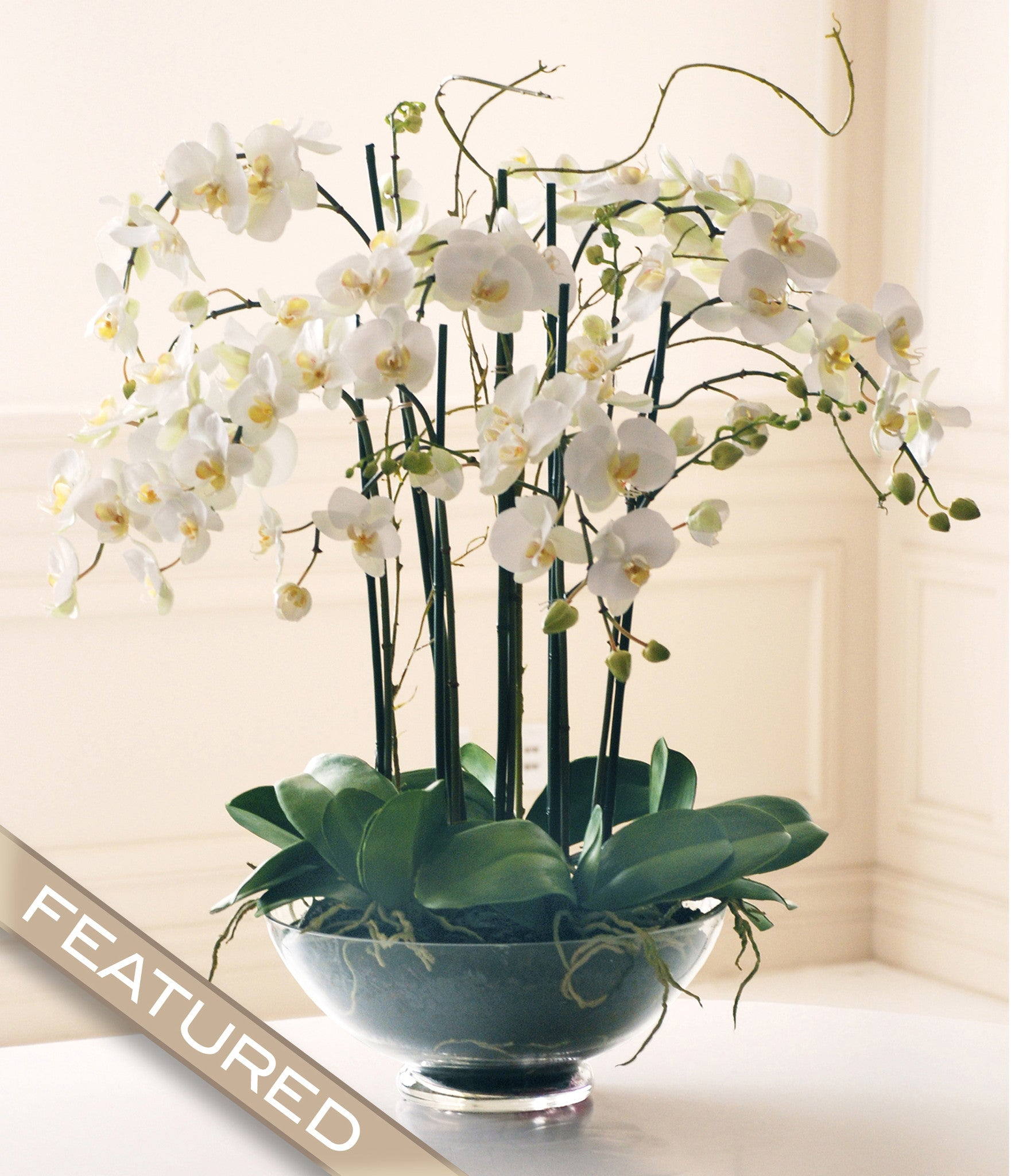 Greatest Phalaenopsis in Glass | Winward Home Finest Permanent Botanicals AT54