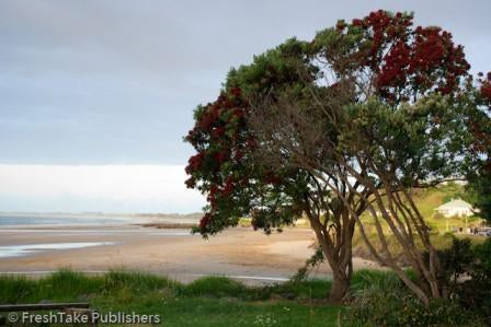 NZ Calendar: Pohutukawa Tree, Ahipara, Ninety-mile beach, New Zealand