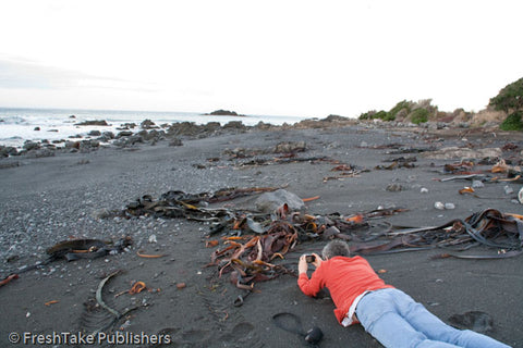 Photo of David Hammond taking a photo of the seal colony at Cape Palliser, NZ.