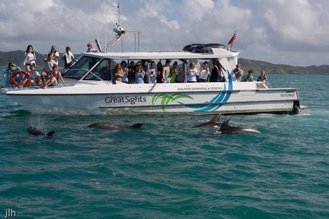 Photo of a dolphins in the Bay of Islands