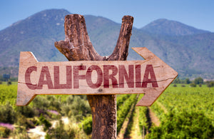 Exploring Wine Regions Of California