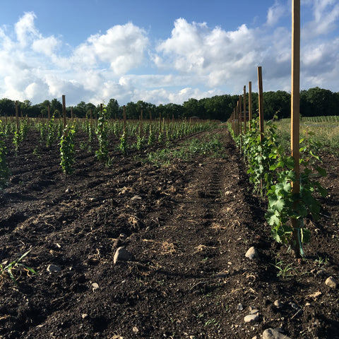 Kemmeter's Newly-Planted Estate Vineyard
