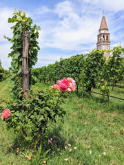 Photo of Venissa's Dorona Vineyard