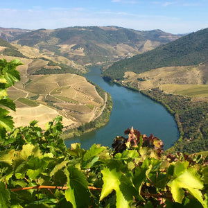 Wines of Portugal Part 1: From North to Central