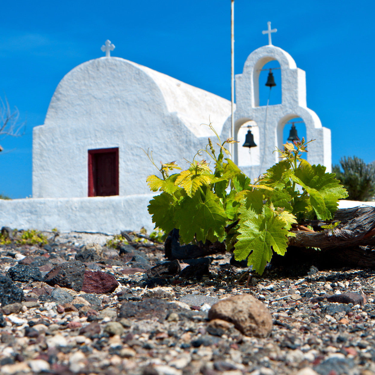 Wines of Spain, Portugal & Greece
