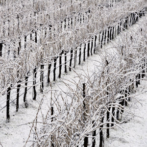 Cool Climate Wines of the World
