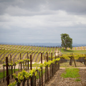 California Wine Appellation Specialist CWAS® Paso Robles & the Rest of SLO