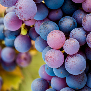 Wine Grapes of the World Series