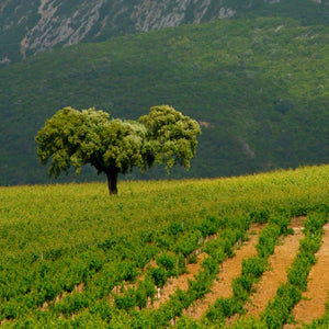 Wines of Portugal Part 2: From Central to South