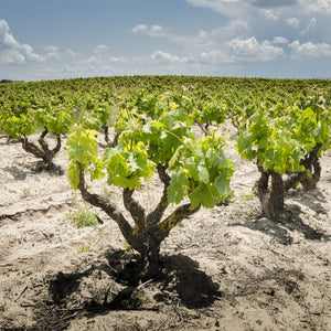 Wines of the Duero River Valley