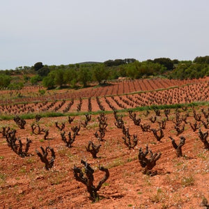Wines of the Central Mediterranean Coast & the Meseta