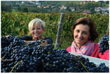 Special Event: Celebrate the Wines of Piemonte, Italy