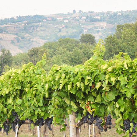 Red Wines of Southern Italy