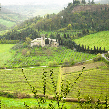 White Wines of the Italian Mountains