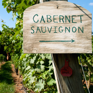 Cabernet Sauvignons of the World