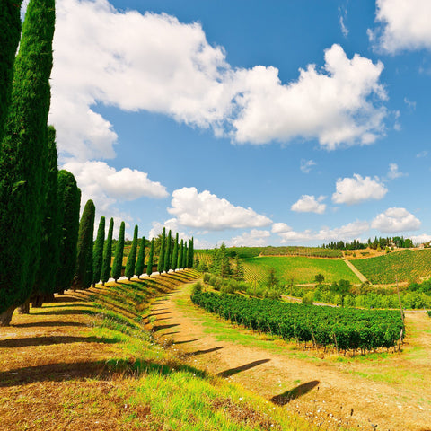 Tasting Tuesday: Greatest Wines of Italy