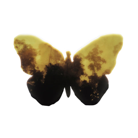 Butterfly (Yellow) Lightbox by Lisa Roet