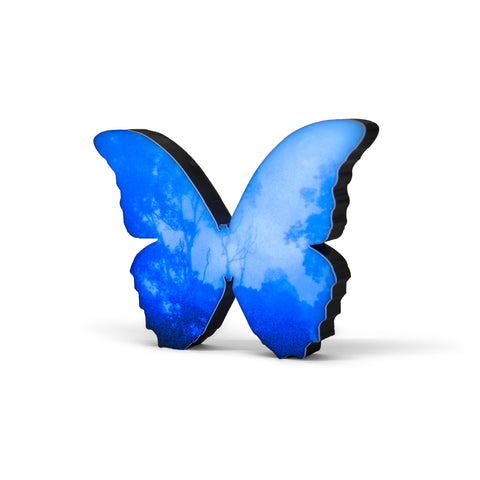 Butterfly (Blue) Lightbox