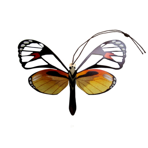 Glass Wing Butterfly Ornament (Ithomia jucunda)
