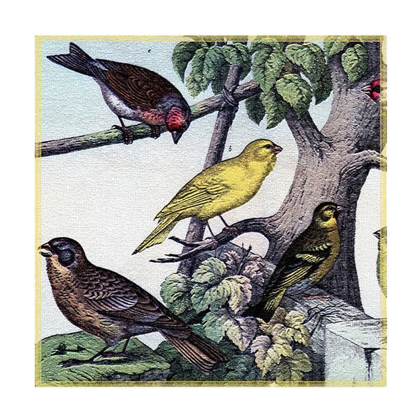 Leaf Designs Birdson Tree Coaster - Set Of 6