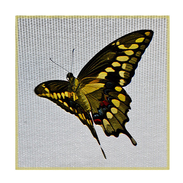 Leaf Designs Black And Yellow Butterfly Coaster - Set Of 6
