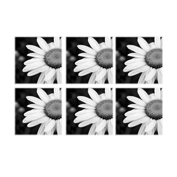 Leaf Designs Black And White Daisy Coaster - Set Of 6