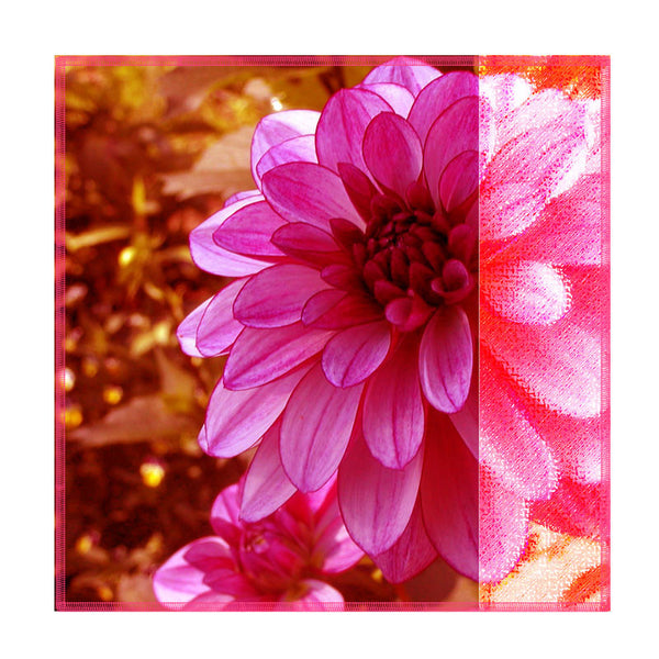 Leaf Designs Pink Dahlia Coasters - Set Of 6