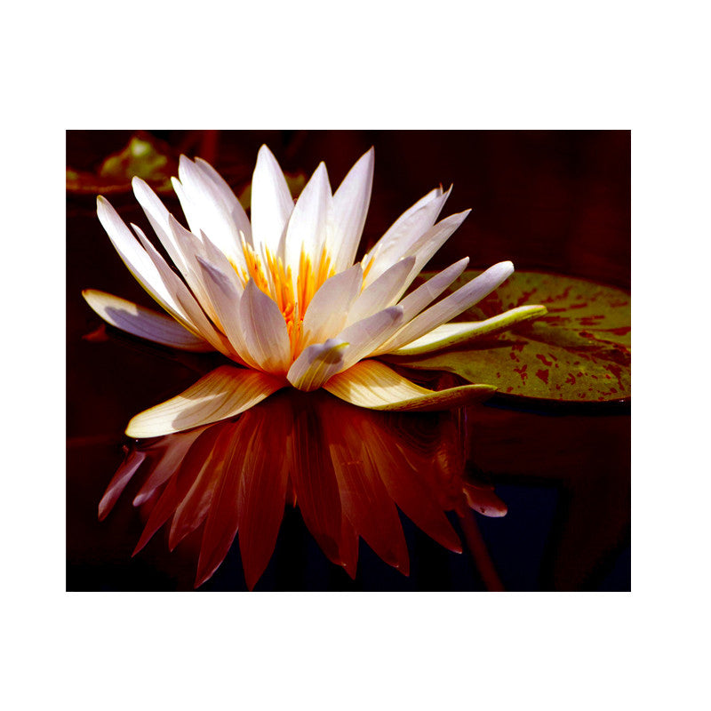 Leaf Designs Ivory Lotus Poster
