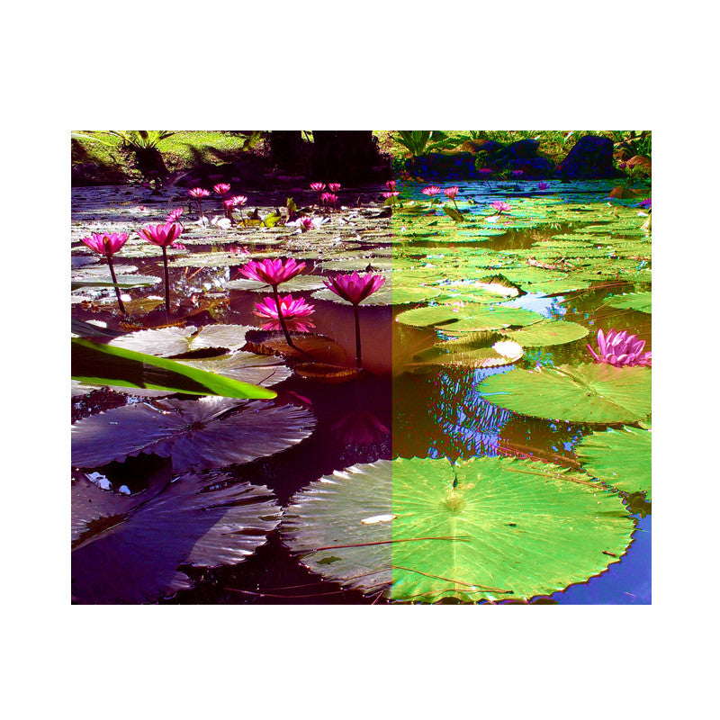 Leaf Designs Pink & Green Lotus Poster