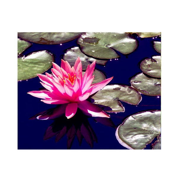 Leaf Designs Pink & Blue Lotus Poster