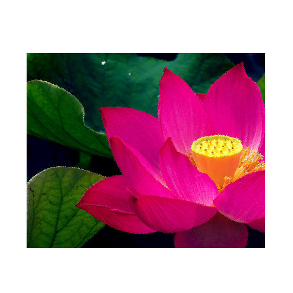 Leaf Designs Pink & Yellow Lotus Poster