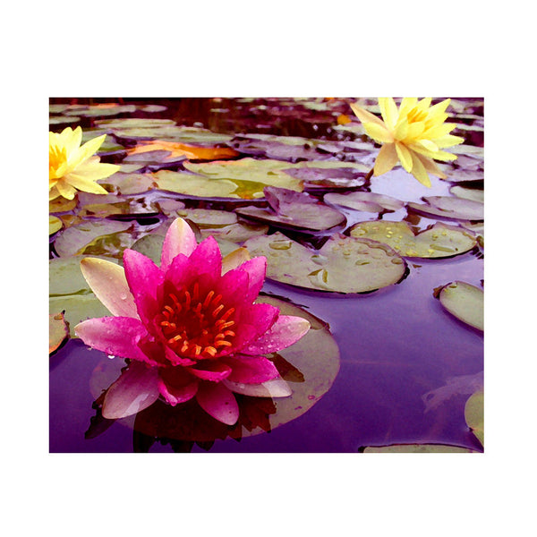 Leaf Designs Pink & 2 Yellow Lotus Poster