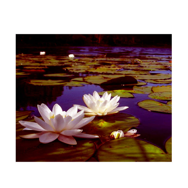 Leaf Designs White Lotus Poster