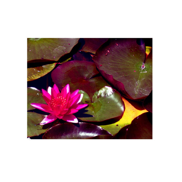 Leaf Designs Fuchsia Lotus With Leaves Poster