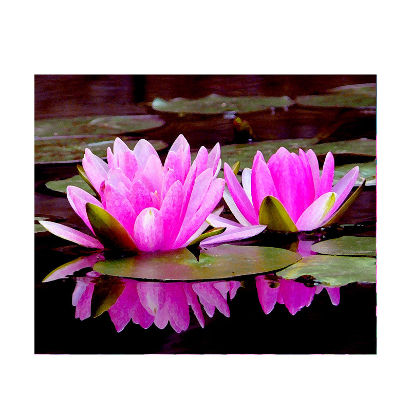 Leaf Designs Pink Double Lotus Poster