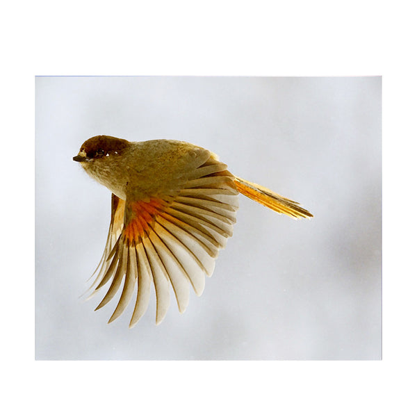 Leaf Designs Yellow Flying Bird Poster