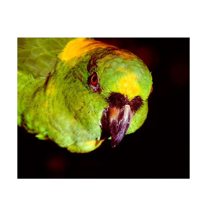 Leaf Designs Green Parrot Poster