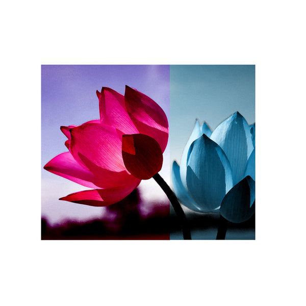 Leaf Designs Fuchsia & Blue Shaded Lotus Poster