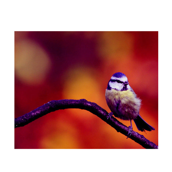 Leaf Designs Purple Bird Poster