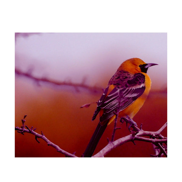Leaf Designs Yellow & Purple Bird Poster