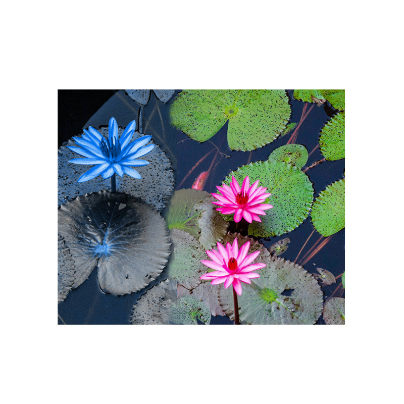 Leaf Designs Blue & Pink Lotus Table Poster