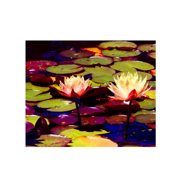 Leaf Designs Lightening Lotus Poster