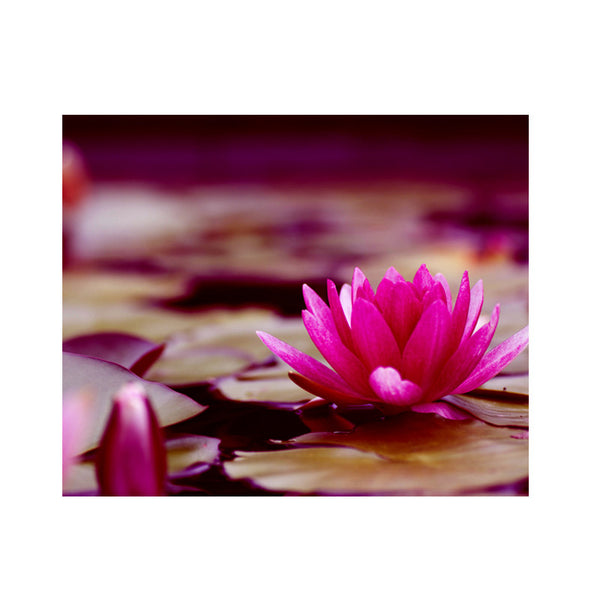Leaf Designs Pink & Sepia Shaded Lotus Poster
