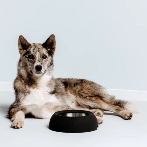 Large Spill Resistant Pet Bowl | Black Stone