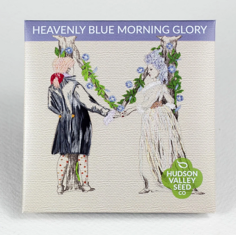 Heavenly Blue Morning Glory Seeds - Art Seed Packs