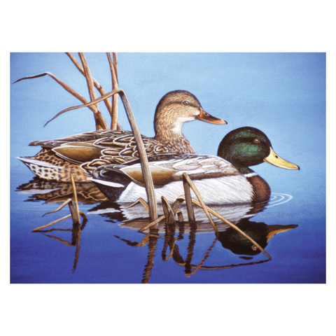 Mallards in Blue Water Paint by Numbers - Large