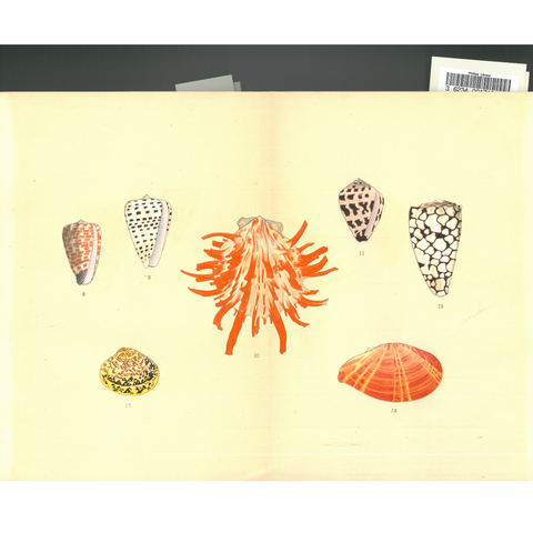 PEM Collection Masks: Illustrations of a Thousand Shells