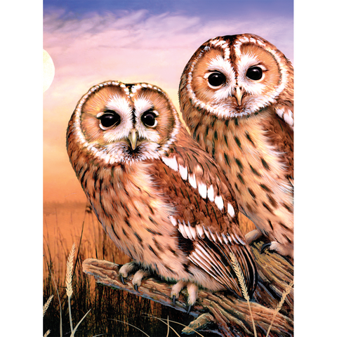 Tawny Owls Paint by Numbers - Small