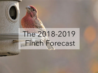 The 2018-19 Winter Finch Forecast