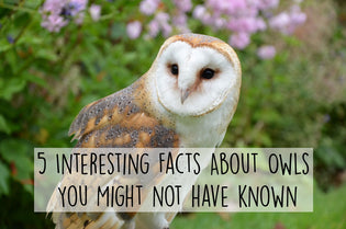 facts-about-owls